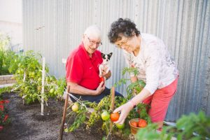 A man sits on a raised garden bed with dog in arms while a lady picks tomatoes.