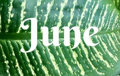 June Menu Calendar & Newsletter/Activity Calendar